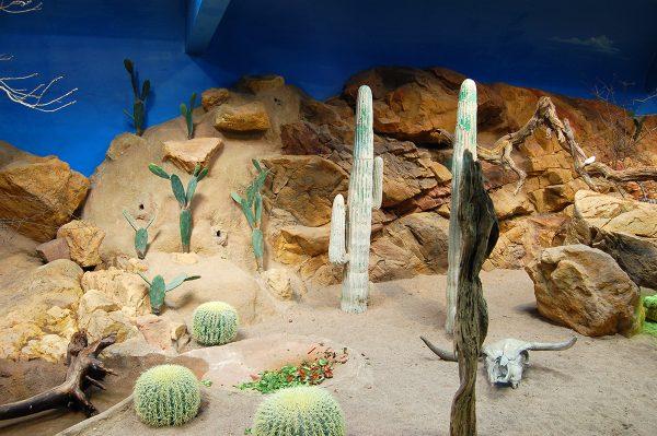 Den levande öknen på Skansen-Akvariet