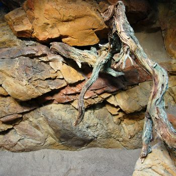 Den levande öknen – Skansen-Akvariet