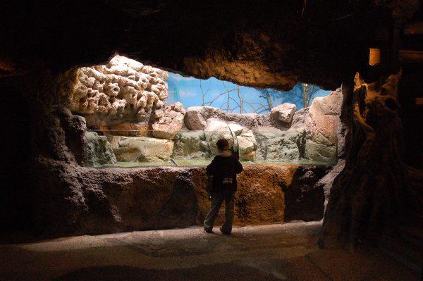 Mangrovelandskap till Skansen-Akvariet