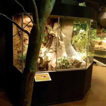 Tropiska miljöer till Amfibiehuset på Nordens ark