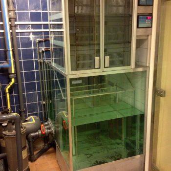Egentillverkat biologiskt tre-stegsfilter, Biobox 300